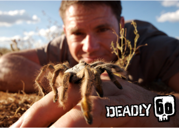 Deadly 60: la serie tv con Steve Backshall sbarca su POP